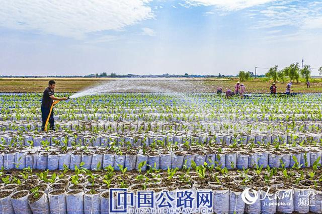 江苏:建成农村公路3141公里
